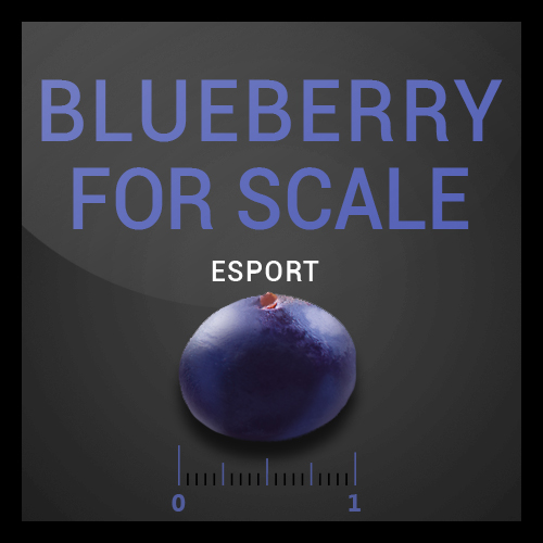BLUEBERRY FOR SCALE Bluberry_For_Scale