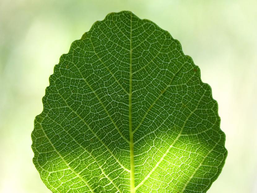 leaf-1461837.jpg?width=830&height=623
