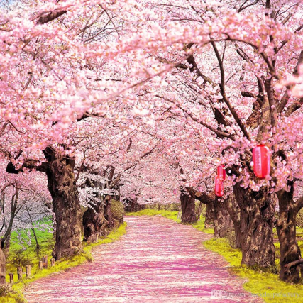 pink-cherry-blossoms-photo-shoot-backgrounds.png?width=427&height=427