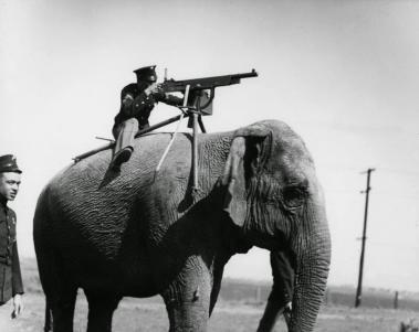 Elephant-mounted_machine-gun_1914.jpg?width=379&height=301