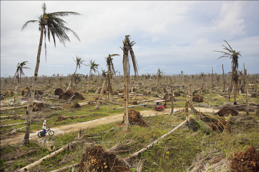 Screenshot_2021-09-13_at_21-08-01_Aftermath_typhoon_Haiyan_Destroyed_coconot_trees_Tricycle_Bicycle_.png