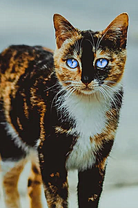 [Hypokits] Als ik kittens had met... - Pagina 4 Unknown