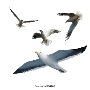 Pngtreeseagull_213807.png?width=300&heig