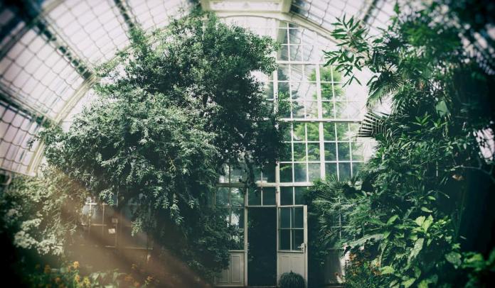 [RENDA BLACK STARS] Casaverde - Kanto Urban-Greenhouse