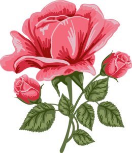 red_rose.png?width=260&height=300
